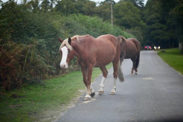 Ponies on road 2