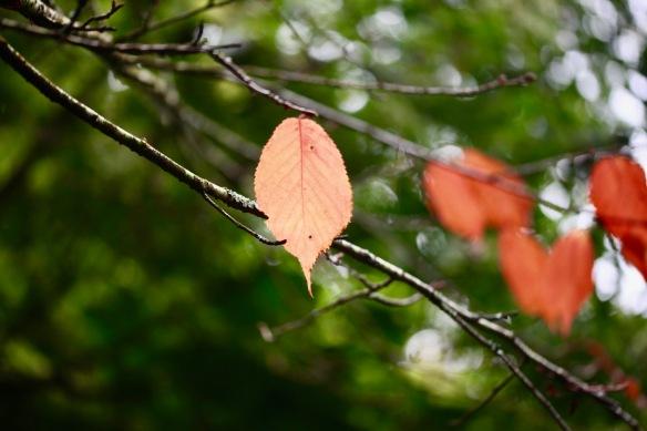 Autumn leaves 3