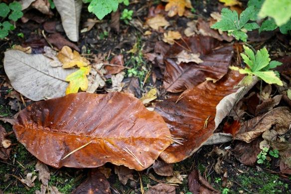 Autumn leaves 4