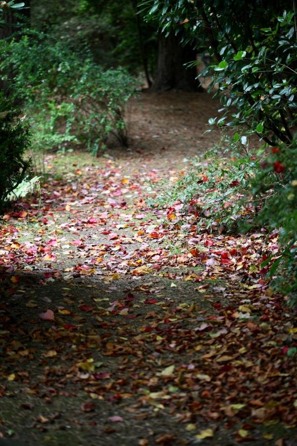 Autumn leaves on path 1