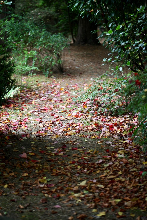 Autumn leaves on path 1