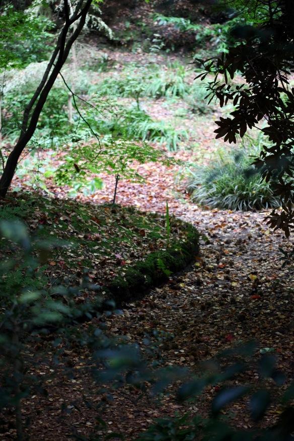 Autumn leaves on path 2