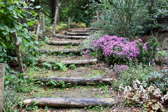 Chrysanthemums and steps