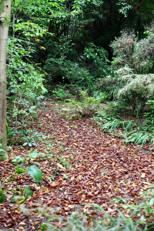 Autumn leaves on path 3