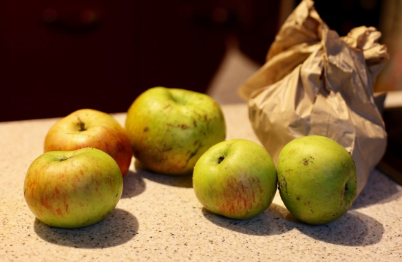 Apples and bag of bulbs