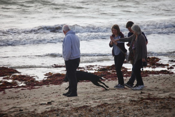 Group with dog on beach