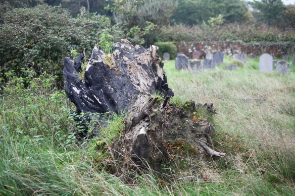 Tree stump and gravestones 1