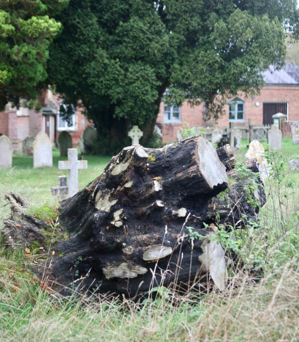 Tree stump and gravestones 2