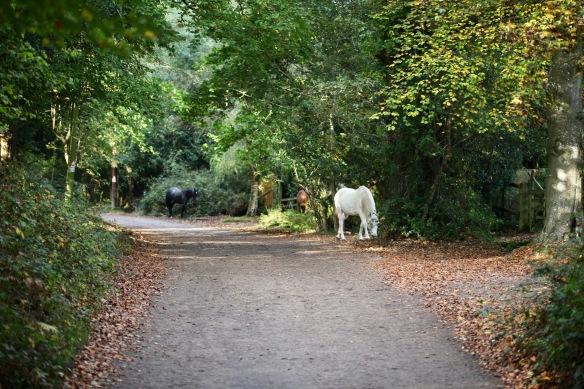 Ponies on lane 1
