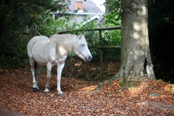 Pony and autumn leaves 1