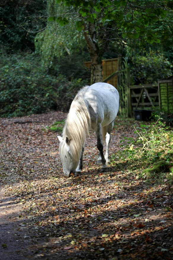 Pony on autumn leaves 2