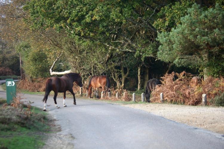 Pony crossing road 2