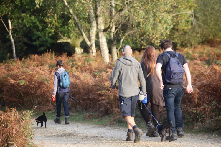 Walkers with dogs