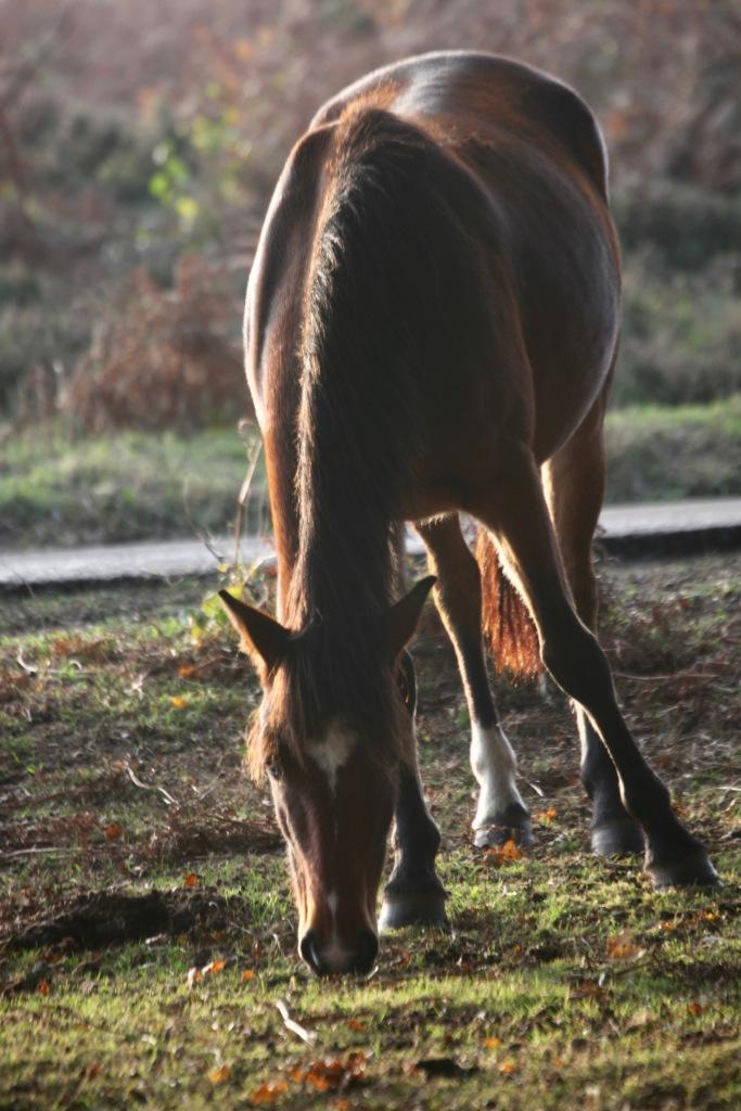 Pony 6