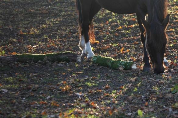 Pony 7