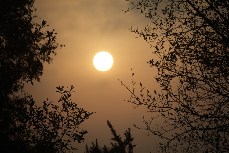 Sun disc bordered by trees