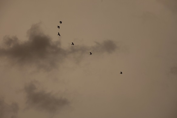 Birds flying against clouds