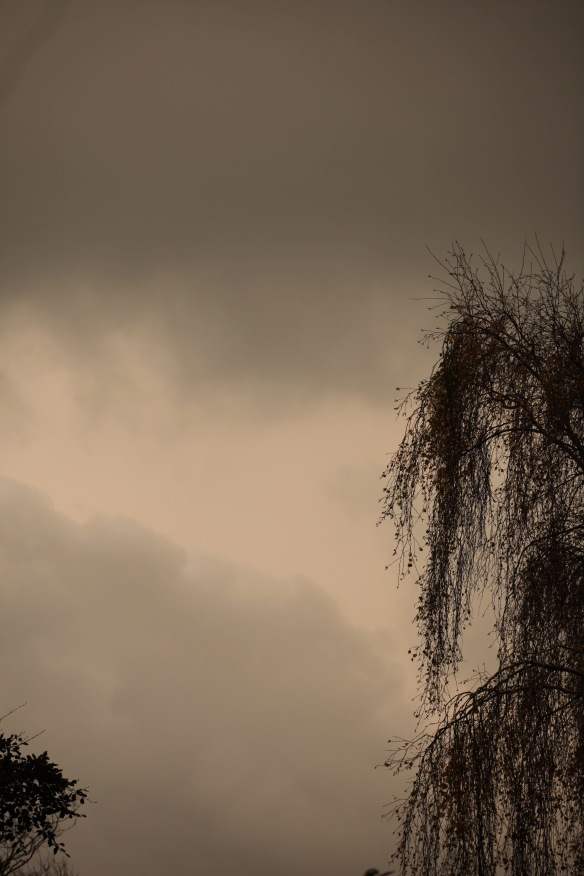 Clouds and weeping birch