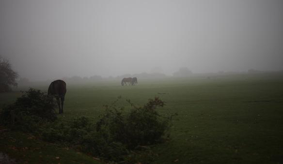 Ponies in mist 2