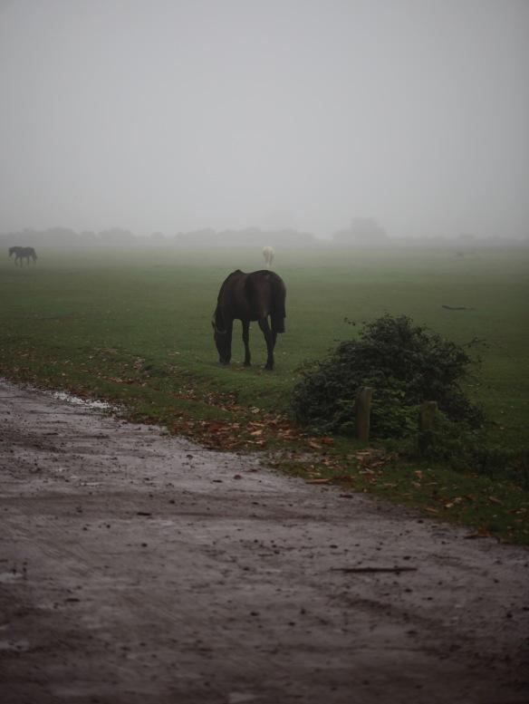 Ponies in mist 3