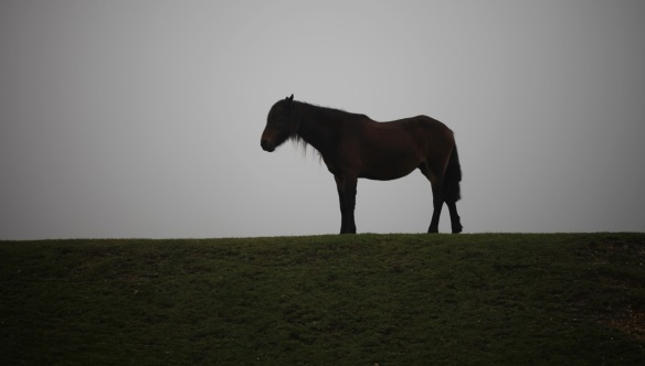 Pony at Wilverley Pit