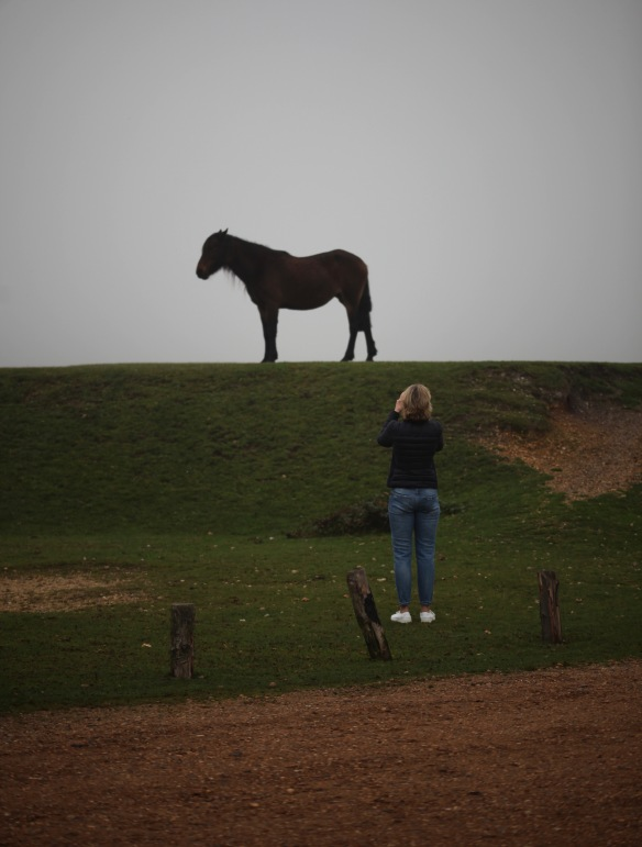 Woman photographing pony
