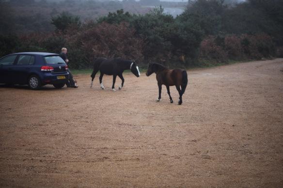Pony encounter