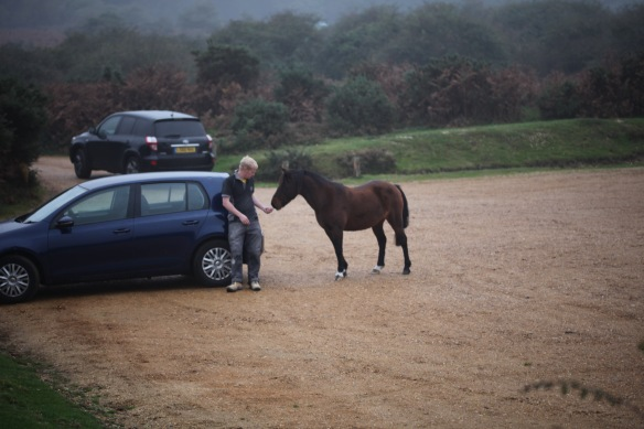Man feeding pony