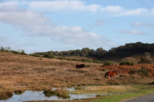 Moorland with ponies