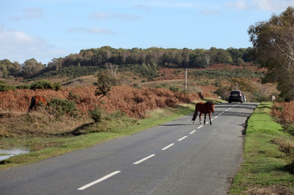 Ponies on moorland road 1