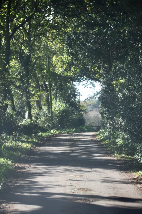 Pauls Lane