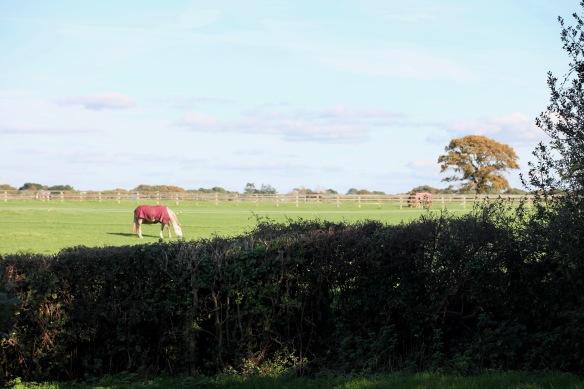 Horses in field 1