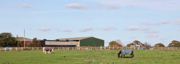 Horses in field 2