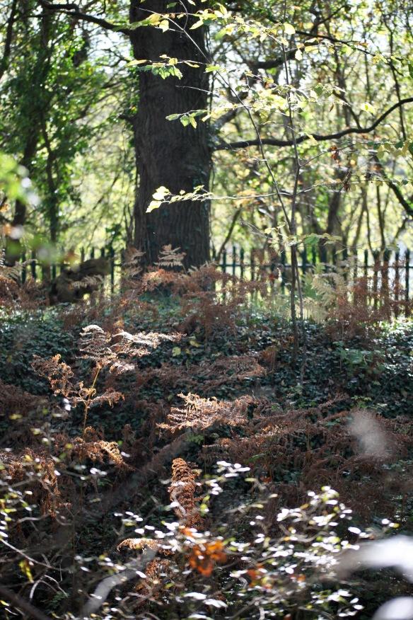 Woodland bracken