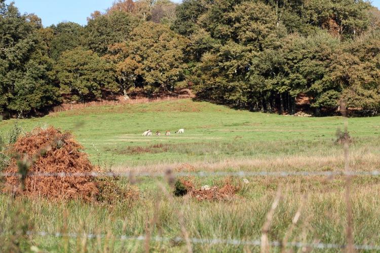 Landscape with deer