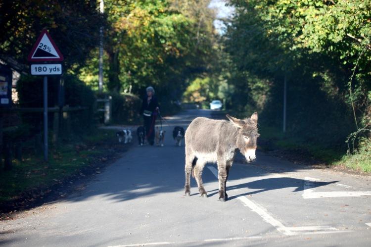 Donkey and dog walker