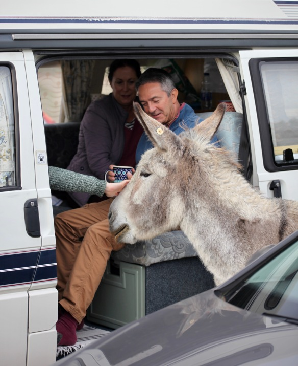 Donkey being petted 1