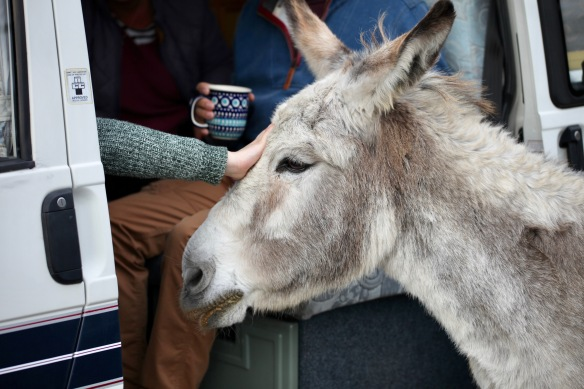 Donkey being petted 2