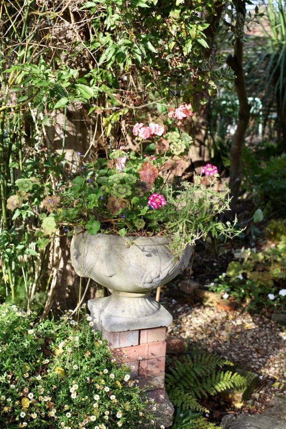 Urn planted and erigeron