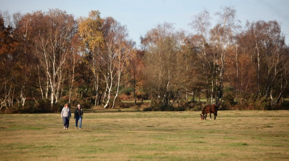 Trees, walkers, pony