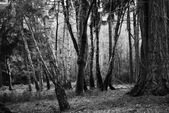Forest scene 3 Version 2