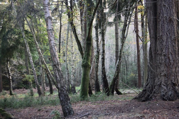 Forest scene 3