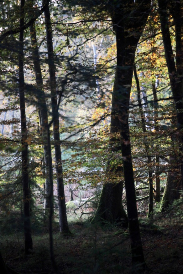 Forest scene 7