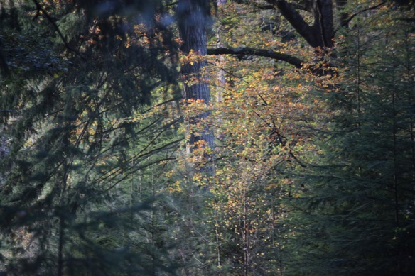 Forest scene 8