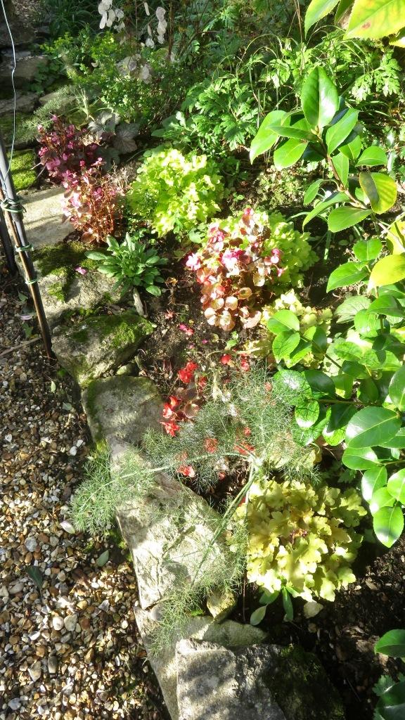 Begonias etc