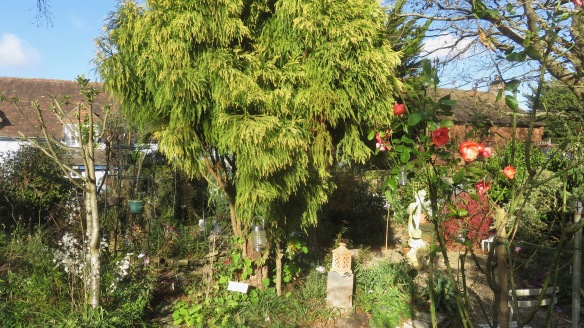 Cryptomeria and bed