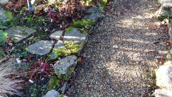 Cryptomeria Bed shadows