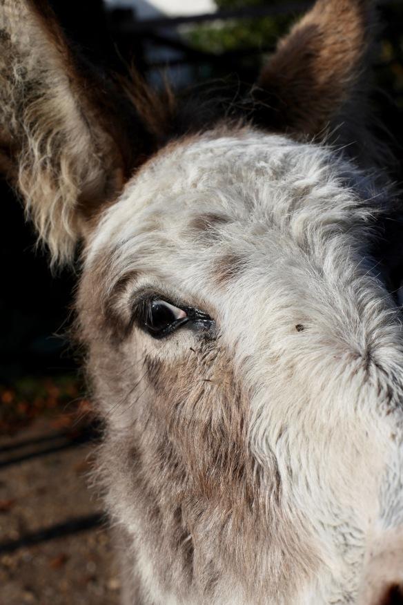 Donkey close-up