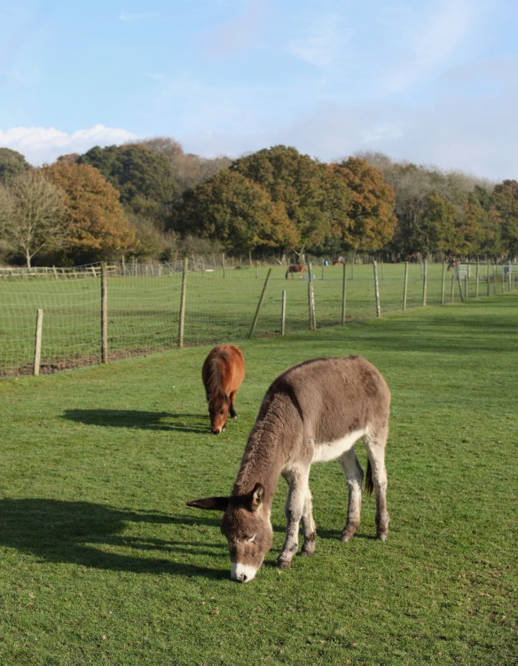 Donkey and ponies