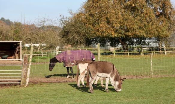 Donkeys and horse